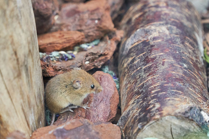 Animal Themes Animal Wildlife Animals In The Wild Close-up Cute Day Field Mouse Mammal Mouse Nature No People Outdoors Rodent Sel18105g Sony A6500 Wildlife & Nature Wildlife Wildlife Photography