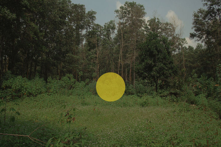 Beauty In Nature Circle Day Field Forest Green Color Growth Land Landscape Nature No People Non-urban Scene Outdoors Plant Scenics - Nature Shape Tranquil Scene Tranquility Tree Yellow