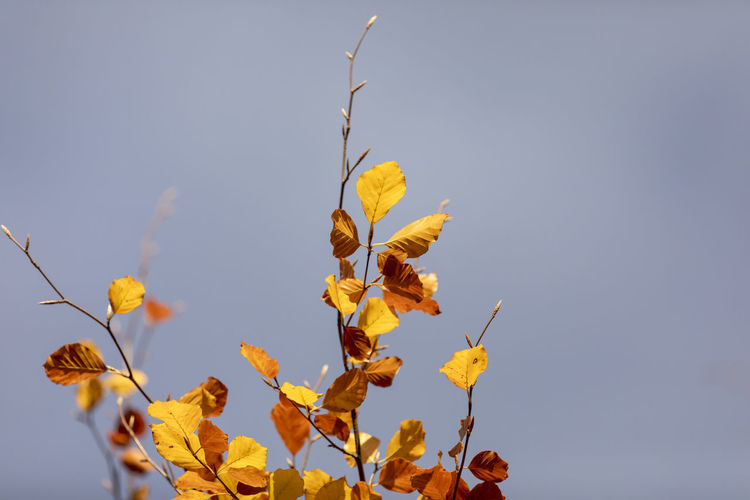 Plant Sky Beauty In Nature Leaf Plant Part Nature No People Low Angle View Growth Day Clear Sky Close-up Yellow Autumn Copy Space Change Tranquility Outdoors Fragility Vulnerability  Leaves Dried