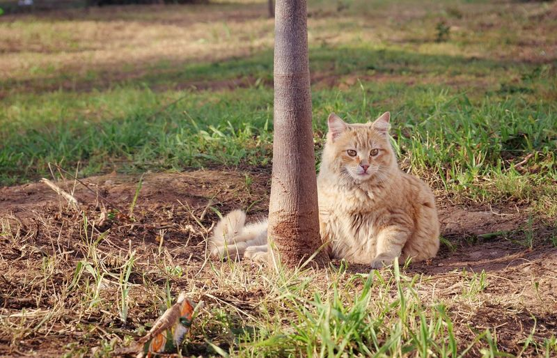 Stray fluffy ginger cat Ginger Stray Cat Stray Cats Quote Background Copy Space Stray Animal Mammal Animal Animal Themes One Animal Grass Field Plant Land Animal Wildlife Animals In The Wild Nature Day No People Feline Portrait Cat Pets