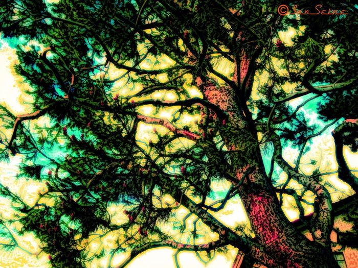 P i n e s a t S u n r i s e Trees Nature_collection Eye4enchanting For The Love Of Trees ~
