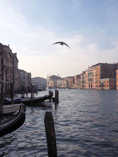 Celestalisblue Canal Celestalis Venice, Italy Venezia Venice Italy Italia Gondola Seagull Gondola - Traditional Boat