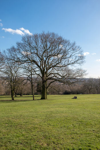 Couple London Alexandra Palace Bare Tree Beauty In Nature Branch Day Field Grass Landscape Lone Nature No People Outdoors Sky Tree