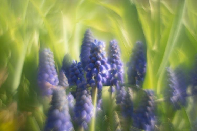 close-up of