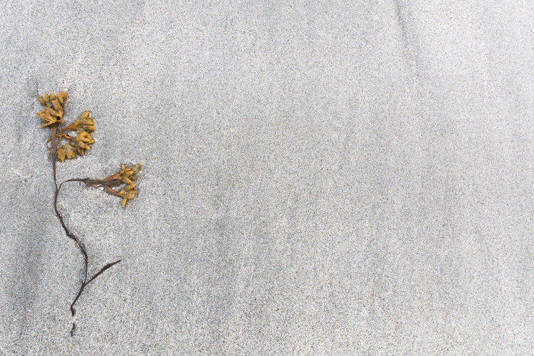 Close-up of plant on sand