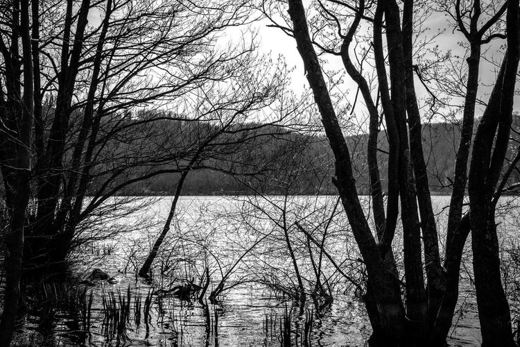 Silhouette bare trees by lake in forest against sky