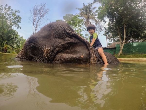 My son bathing an Elephant. Bath Time Animal Wildlife Bath Sponge Boy Boys Will Be Boys Childhood Childhood Memories Elephant Elephant Calf Full Length Leisure Activity Lifestyles Mammal Nature One Animal One Person Outdoors Real People Sitting Three Quarter Length Tree Water