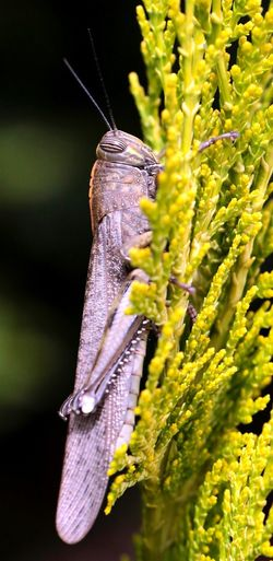Close-up of insect on plants