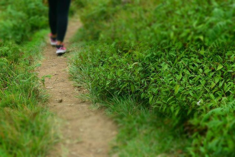 We still need a longer walk Green Color Grass Growth Nature Adult Human Leg Human Body Part Close-up Adults Only Low Section One Person Outdoors Day People Nature Hiking Lonelyday Lonelymountain Gettyimages Nature Photography View EyeEm Best Shots EyeEm Gallery Nature_perfection Mountain View Second Acts Perspectives On Nature