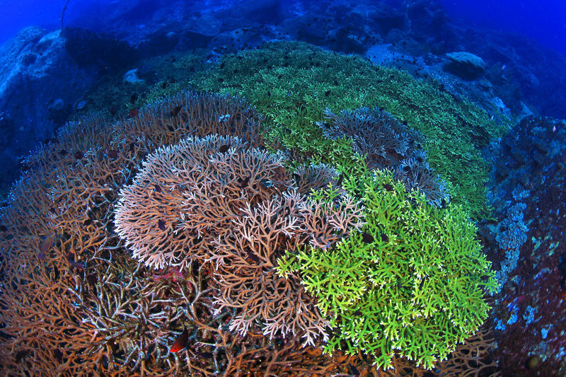 Koh Losin, Thailand Sea Life Underwater Sea UnderSea Water Coral Nature Beauty In Nature Outdoors underwater photography