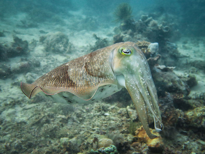 Close-up of elephant fish swimming in sea