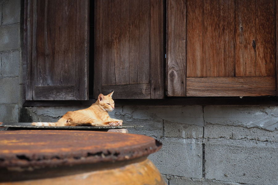 EyeEm Selects One Animal Domestic Cat Animal Themes Pets Feline Lie Down Pottery Baked Clay Cover Domestic Animals Animal Sitting Mammal No People Portrait Day Outdoors