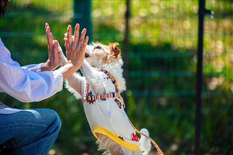 Bokeh Photography Bokeh Kinoko Jack Russell Terrier Jackrussell Motion High Five Trick  Training Real People Day Human Hand Focus On Foreground Hand Animal Wildlife Nature People Women Leisure Activity Lifestyles Sunlight Animals In The Wild One Animal Adult Outdoors Finger