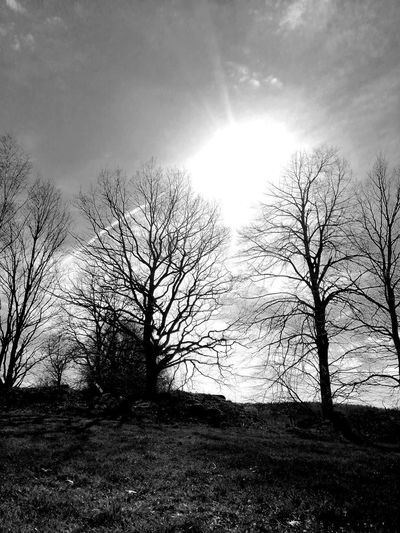 Unforgettable Unforgettable Moment Unforgettable ♥ Tree Bare Tree Sky Landscape Cloud - Sky