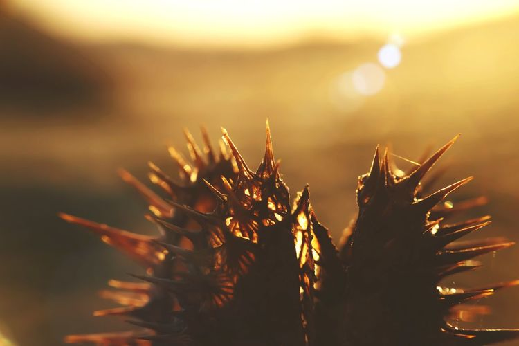 Light Flare Of Light Nature Growth Plant No People Outdoors Close-up Water Beauty In Nature Sunlight Sunset Day Freshness