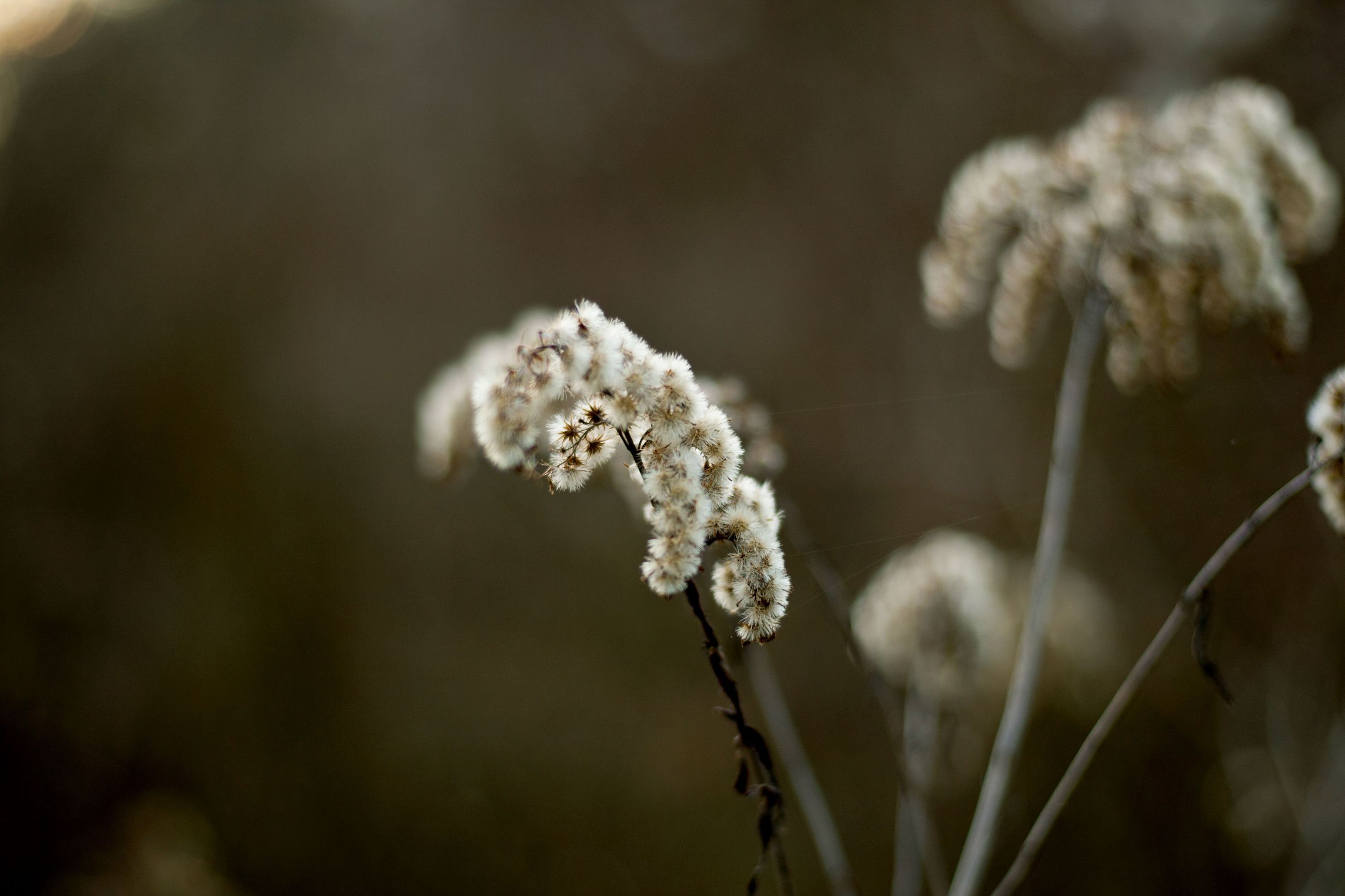 fragility, nature, plant, growth, beauty in nature, close-up, flower, no people, outdoors, day, flower head, freshness