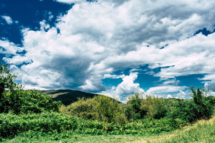 Scenic view of land and trees against sky