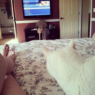 Memorial Day evening: lounging in bed with On Demand, the husband, and cats.