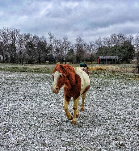 Horse Life Horse <3 Landscape #Nature #photography HDR Collection