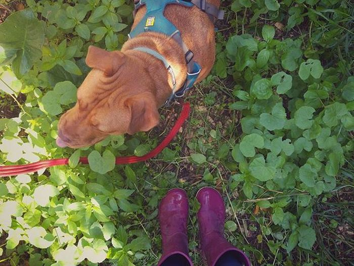 Morning walk with Mitzi_dog Fromwhereyaarastand Fromwhereistand