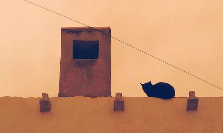 Art ArtWork Art Gallery Artphotography Artistic Photo Looking Cat Cats Catslife Cat Lovers Animal Relaxing Animal Photography Animal Themes Black Cat Black Cats Roof Cat♡ On The Roof Seated Seated Cat Cat Positions Cat Watching Artphoto EyeEm Best Shots