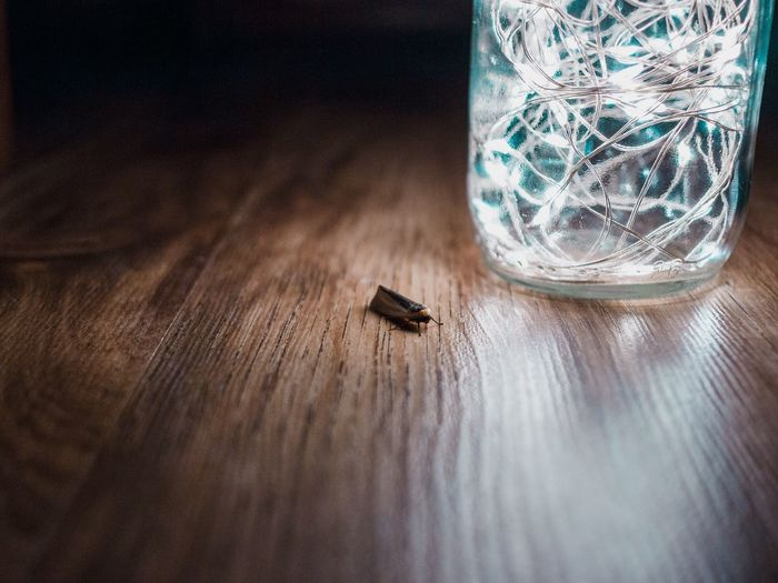 Close-up of insect by illuminated string lights in jar on table