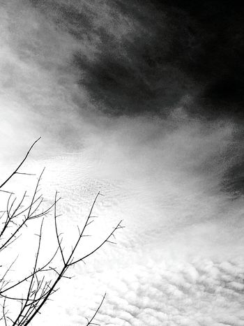 Low Angle View Sky Nature Cloud - Sky No People Outdoors Beauty In Nature Day Backgrounds Growth Bird Animal Themes Vapor Trail Astronomy Blackandwhite Photography Black And White Photography Blackandwhite Black And White Clouds Tree Tranquility Tranquil Scene Clouds And Sky Cloudy Day Clouds And Trees