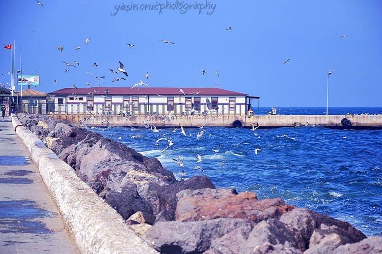 Mudanya Martılar Deniz Foto