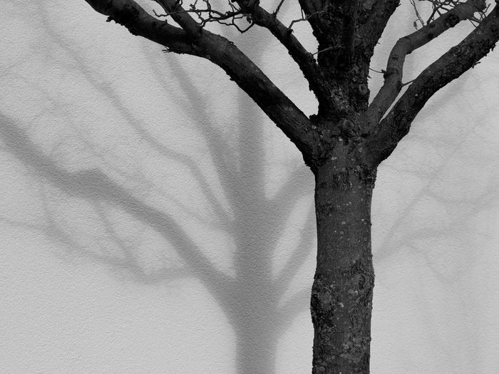 Abstract Black & White Black And White Blackandwhite Photography Close-up EyeEm Nature Lover Light And Shadow Minimal Minimalism Minimalobsession Monochrome Nature No People Shadow The City Light Tree Tree Trunk Wall - Building Feature