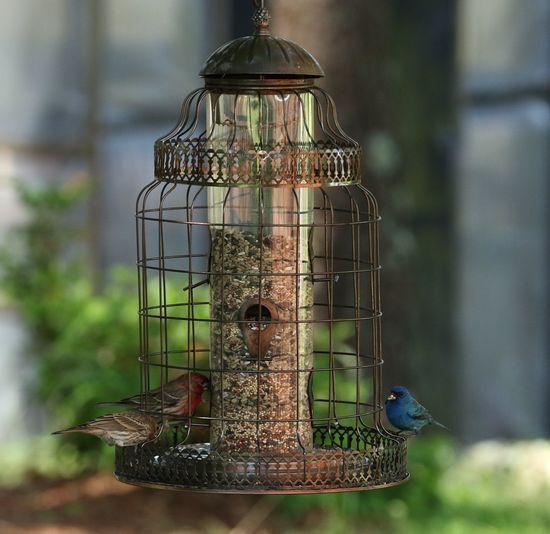 Bird feeder Lndigo Bunting Beauty In Nature Bird Watching Nature