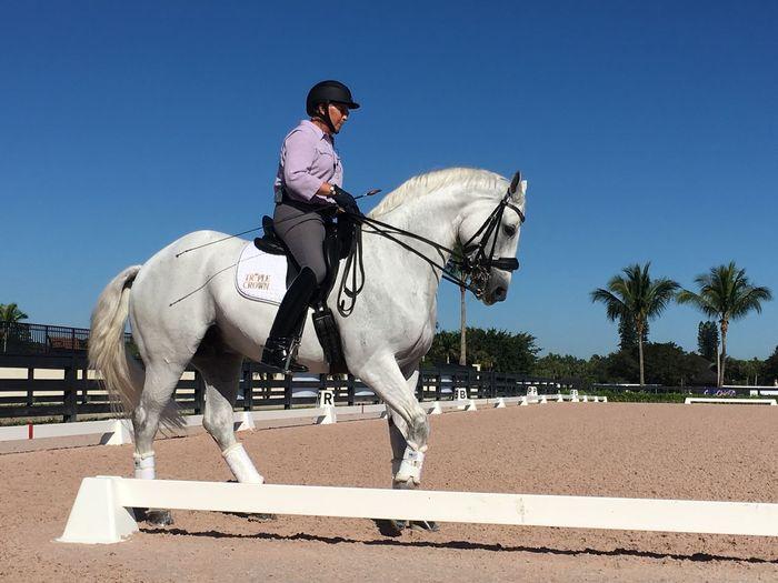 Horse Horseback