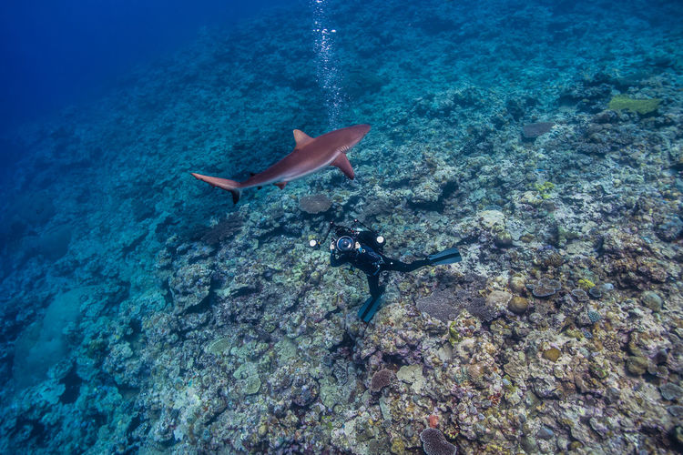 dance with shark Animal Themes Beauty In Nature Day Nature No People Outdoors Scuba Diving Sea Sea Life Shark Swimming UnderSea Underwater Underwater World