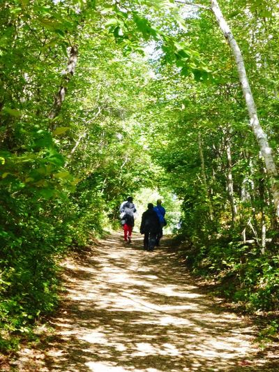 Anne Of Green Gables Prince Edward Island Lovers Lane Canada Trees