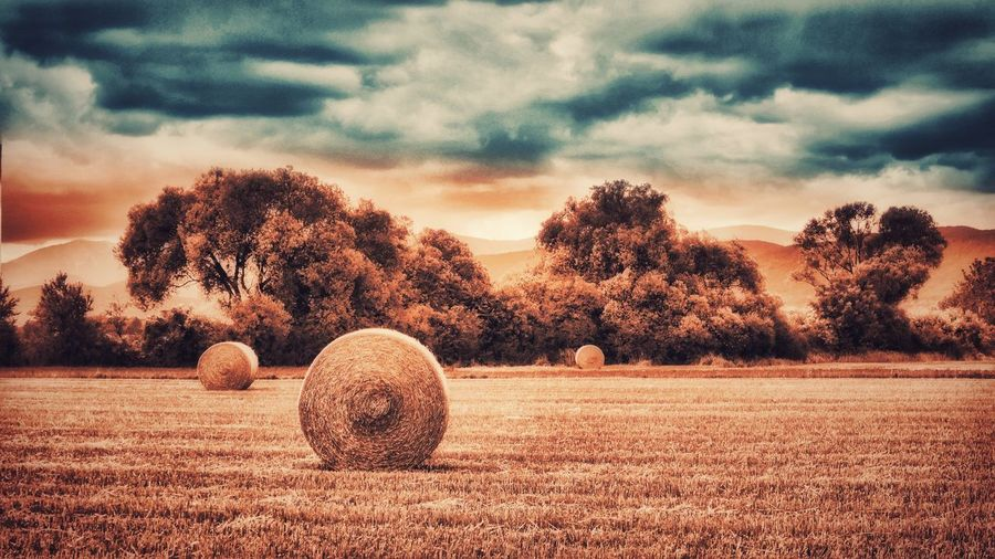 Bale  Hay Rural Scene Agriculture Tranquil Scene Tree Landscape Harvesting Tranquility Sky Beauty In Nature Cloud - Sky Outdoors Landscape Photography A Photo Like A Painting Austria Melancholic Landscapes Mystical Atmosphere Non-urban Scene Field Dramatic Sky Global Photographer-Collection Landscape_photography Capture The Moment