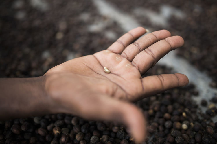 Bean Coffee Coffee Beans Drink Food And Drink Hand Human Body Part Human Hand Roasted Coffee Bean Viñales
