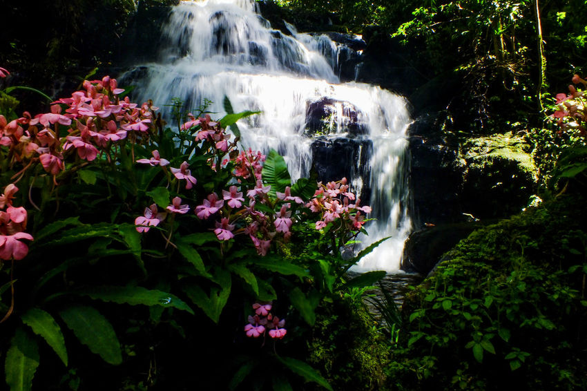 Mun dang waterfall 5th floor37 Flower Waterfall Beauty In Nature Water Nature Outdoors No People Day Freshness Forest Travel Destinations Vacations The Week On EyeEm EyeEmNewHere Nature Reserve Freshness Beauty In Nature Growth Snapdragon Wild Flowers Fragility Pink Color Flower Head
