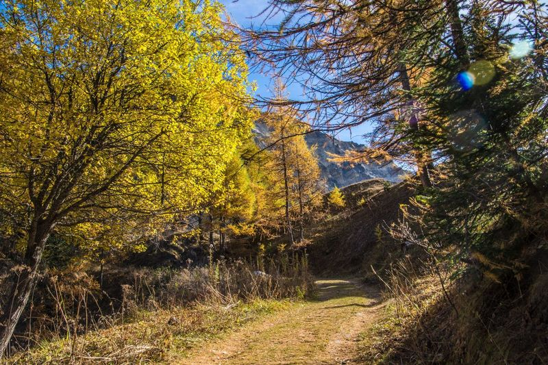 col of lien,valais,swiss Tree Plant Land Nature Landscape Autumn Tranquility Forest Environment Tranquil Scene Scenics - Nature Beauty In Nature No People Non-urban Scene Day Sunlight Growth Outdoors Sky Change WoodLand Treelined