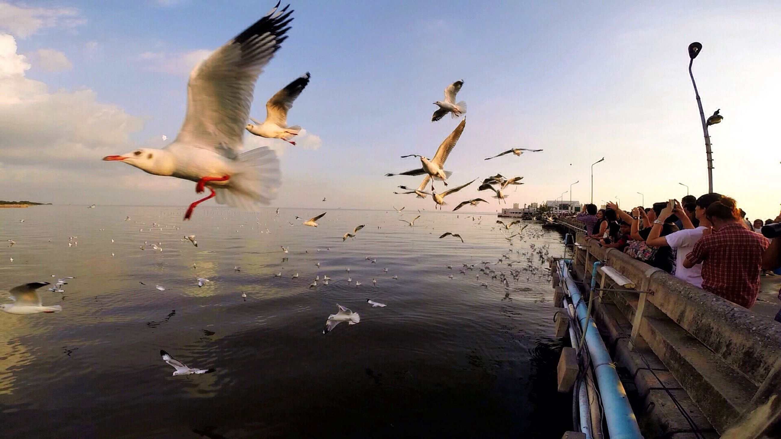 bird, water, animal themes, animals in the wild, flying, sky, sea, seagull, wildlife, one animal, beach, spread wings, nature, built structure, shore, day, cloud - sky, outdoors, building exterior