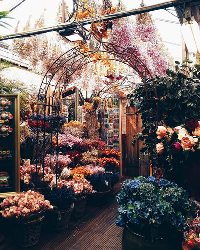 Amsterdam Beautiful City Colourful Europe Europe Trip Flowers Market VSCO Vscocam