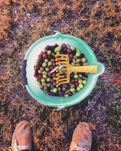 Low section of person by bucket full of olives on field
