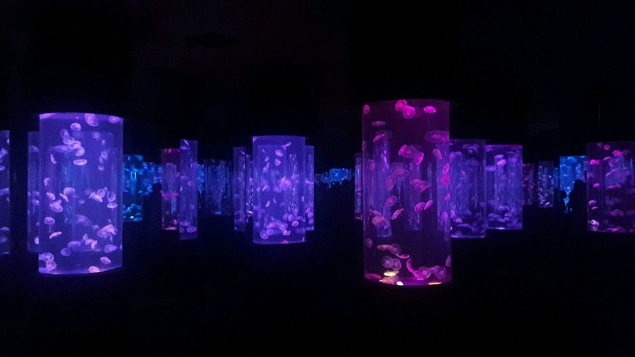 Overnight Success Illuminated Black Background Dark Studio Shot Ideas Side By Side In A Row Text Glowing Close-up Night Light Purple Neon Bar - Drink Establishment Scientific Experiment Lit Vibrant Color Pink Color Tray OceanPark Manila Philippines Millennial Pink
