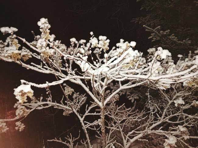 Nature Plant No People Winter Tree Branch Beauty In Nature Close-up Outdoors Day Snowing Cold Temperature