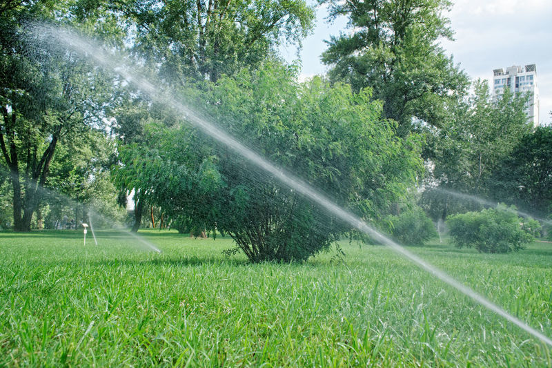 Sprinkler watering grass Grass Kiev Sprinkler In Grass Architecture Beauty In Nature Day Garden Hose Grass Green Color Growth Hose Land Lawn Motion Nature No People Outdoors Park Plant Spraying Sprinkler Sprinkler System Stream Tree Urban Water Water Drop Watering