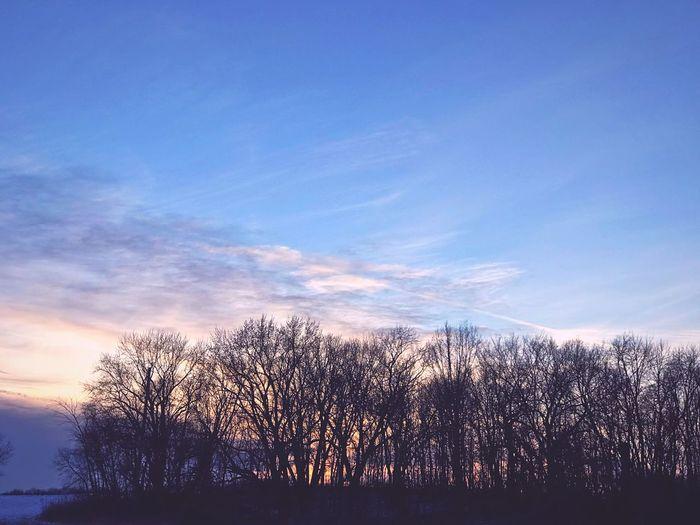 Bare trees on landscape against blue sky