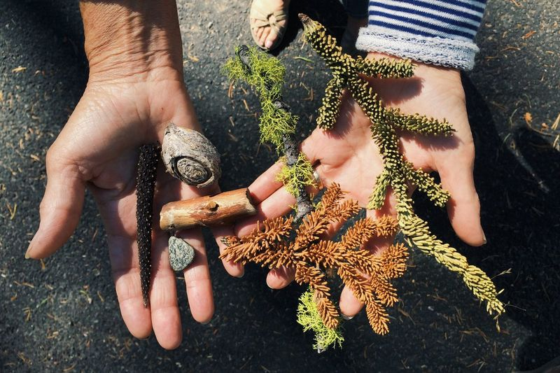 Cropped hands of woman holding twigs