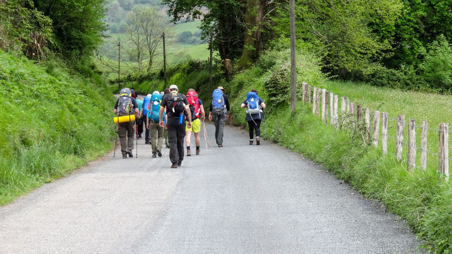 Rear view of hikers walking on road amidst trees