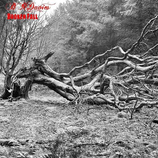 """""""Broken fall"""" Treharris ( final edit Welsh Wales Cymru Forest Forestry Tree Trees Nature Beautiful Treesrock Forest Wood Woods Instanature TreePorn Leafs Branches Ilovetrees Ic_trees Splendid_woodlands Unitedbytrees Treeworld Treescollection Rsa_trees Tree_captures beautiful life pictureoftheday blackandwhite tagsta_nature love )"""