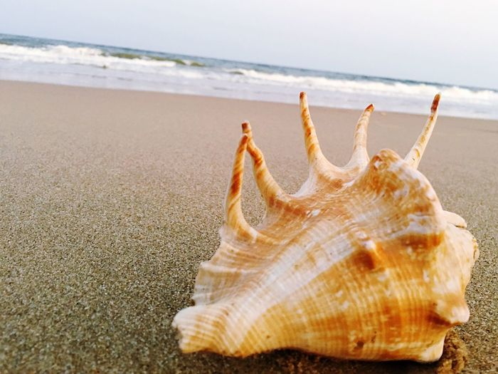 Close-Up Of Conch Shell On Shore At Beach Against Sky