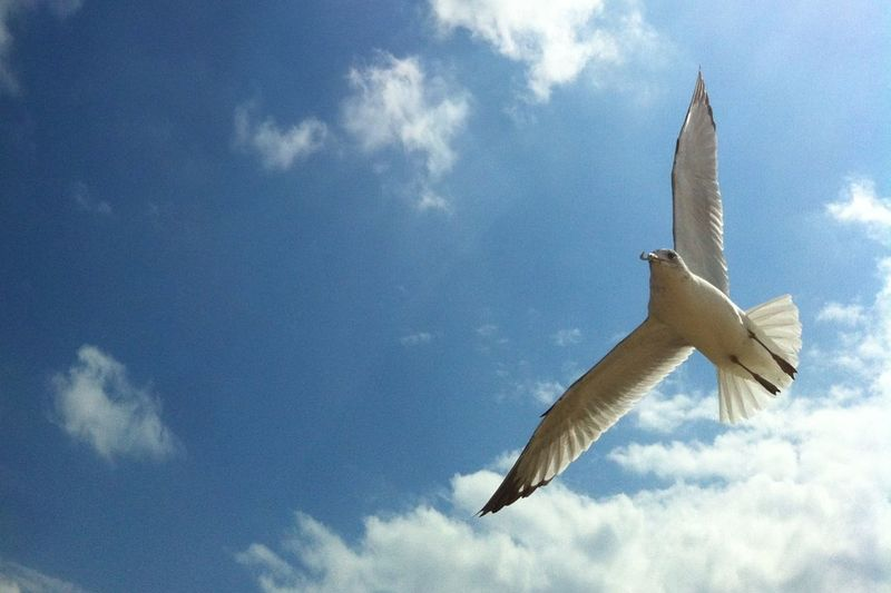 - TΗΣΥ FLΣΨ - Sky The Purist (no Edit, No Filter) No Filter Sea Seagulls Birds IPhoneography Clouds Seaside Blue