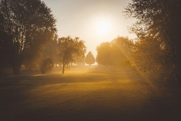 burgandy - France - 2016 ©sebastien.rossi Bourgogne France Burgandy Environment Landscape Plant Sun Sunbeam